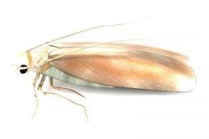realistic 3d render of moth
